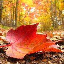 colores en otoño