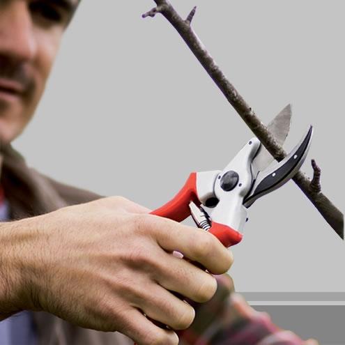 Bellota tijeras de podar herramientas bellota - Herramientas para podar ...